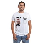 Chihuahua boy 2