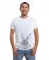 Conejo Asomado 3